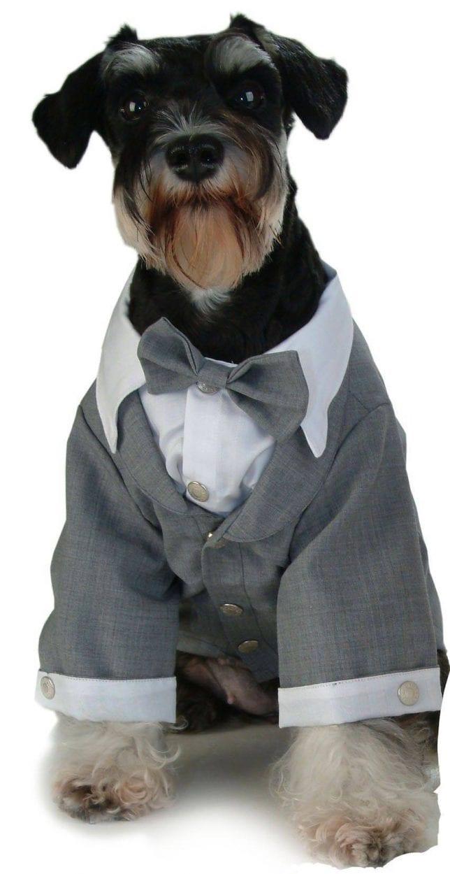Produktbild: Puppy Angel Tuxedo