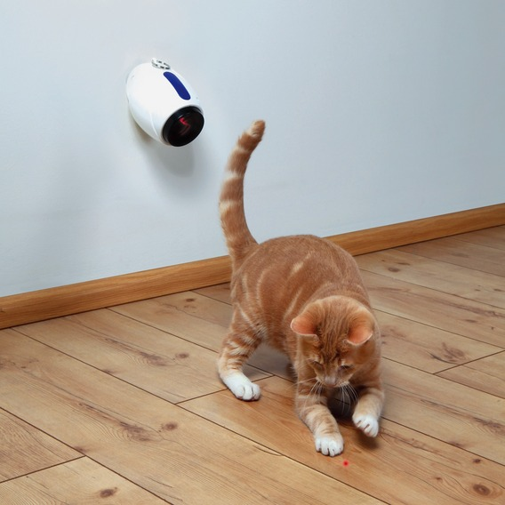 Cat Activity Moving Light