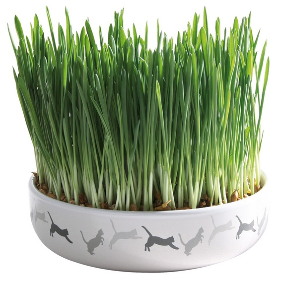Keramikskål Med Kattgräs